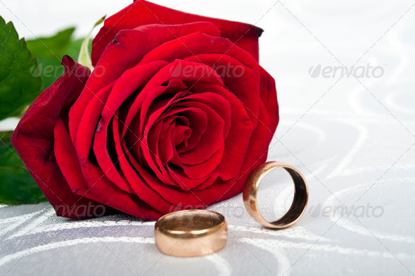 Rose - Stock Photo - Images