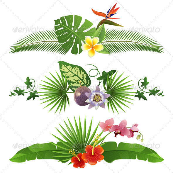 GraphicRiver Tropical Borders 5505142
