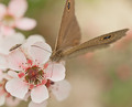 Australian Flower and Native Butterfly - PhotoDune Item for Sale