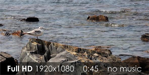VideoHive Seagull 2 5511476
