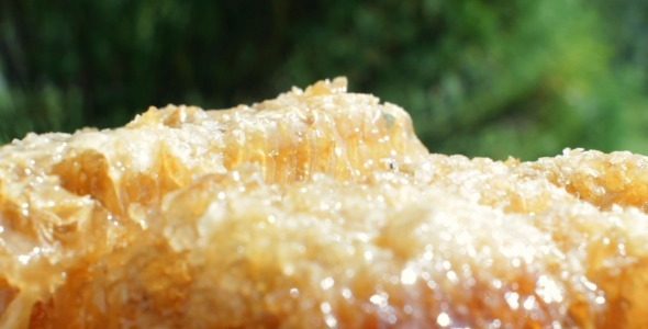 VideoHive Pouring Honey Over Honeycomb 5522695