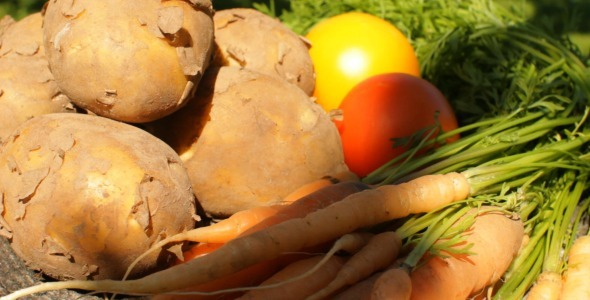 VideoHive Harvest Close-Up 5523366