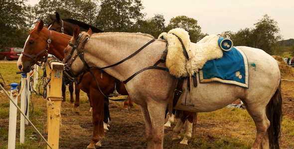 VideoHive The Horses 5523717