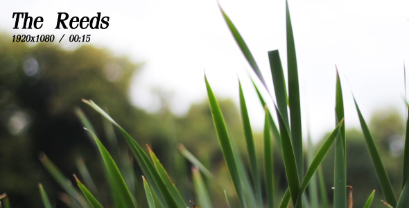 VideoHive The Reeds 5492998