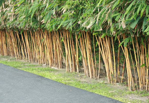garden design with planting bamboo wall stock photo photodune with common landscaping plants from photodune - Growing Bamboo