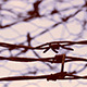 No Escape Barbed Wire - VideoHive Item for Sale
