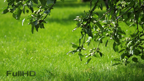 VideoHive Grass and Apple-Tree 5542193