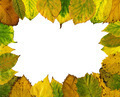 Autumn leaves frame - PhotoDune Item for Sale