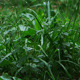 Grass In The Rain - VideoHive Item for Sale