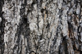 Texture - Wood Bark - PhotoDune Item for Sale