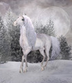 Unicorn In A Winter Scenery - PhotoDune Item for Sale