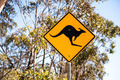 Kangaroo Sign - PhotoDune Item for Sale