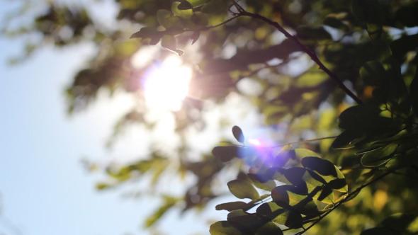VideoHive Sunshine Between Tree Leaves 5557055
