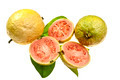 Pink Guava Fruit - PhotoDune Item for Sale