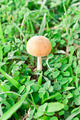 Mushroom - PhotoDune Item for Sale