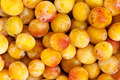 Mirabelles - Freshly Picked - PhotoDune Item for Sale