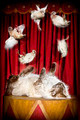 Cat Juggling Birds - PhotoDune Item for Sale