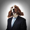 Funny portrait of a dog in a suit - PhotoDune Item for Sale