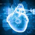 Human heart beats - PhotoDune Item for Sale
