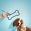 Hungry spaniel dog - PhotoDune Item for Sale