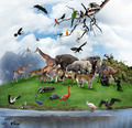 A Collage Of Wild Animals And Birds - PhotoDune Item for Sale