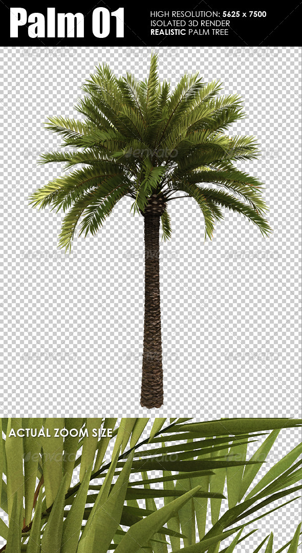 GraphicRiver 3D Render Palm Tree 5591984