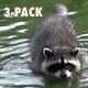 Lagoon Raccoon III - Pack of 3 - VideoHive Item for Sale