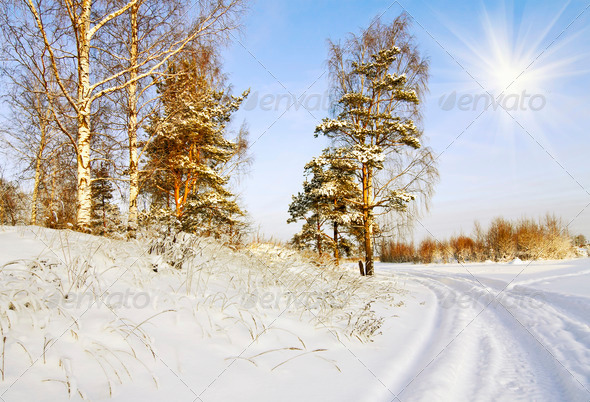 Road Through the Winter Forest - Stock Photo - Images