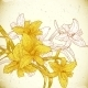 Floral Background with Yellow Lilies - GraphicRiver Item for Sale