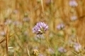 wild flowers in the meadow - PhotoDune Item for Sale
