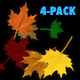 Fall Leaves - Maple Mix - Pack of 4 - VideoHive Item for Sale