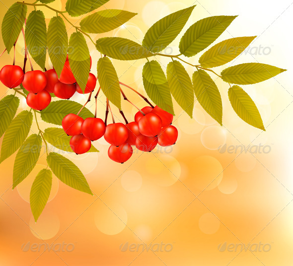 GraphicRiver Autumn Background with Leaves and Rowan 5637921
