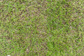 Seamless grass field surface - PhotoDune Item for Sale
