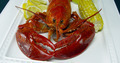 Lobster with Corn - PhotoDune Item for Sale