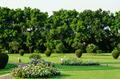Lush Green Park with Flowers - PhotoDune Item for Sale