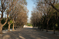 Park Zappeion in Athens - PhotoDune Item for Sale