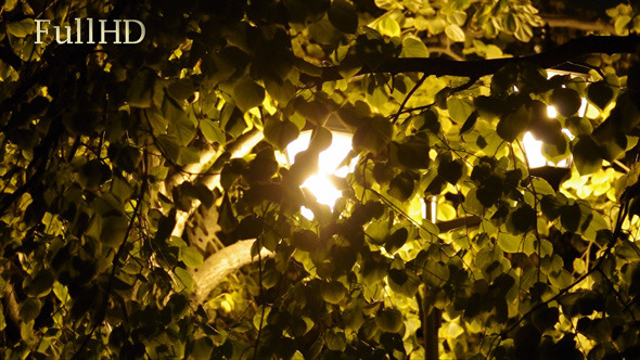 VideoHive City Lantern and Leaves at Night 5687952