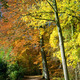 Path through forest with vibrant autumn colors - PhotoDune Item for Sale