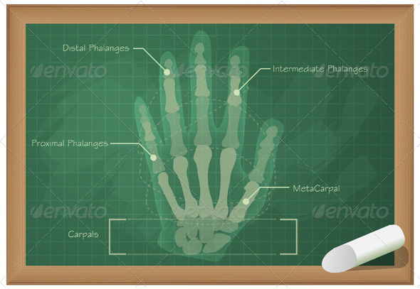 GraphicRiver Anatomy of Human Hand Illustration 5693212