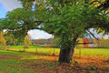 Oak Tree Along River and Pasture in Fall - PhotoDune Item for Sale