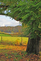Oak Tree Frames Pasture and River - PhotoDune Item for Sale
