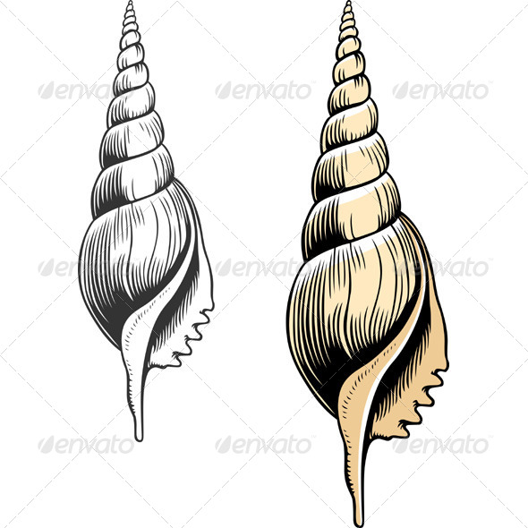 GraphicRiver Seashells 5701008