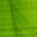 green palm leaf for background - PhotoDune Item for Sale