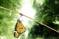 Monarch butterfly emerging from its chrysalis - PhotoDune Item for Sale