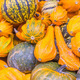 Squash and pumpkins from the market - PhotoDune Item for Sale