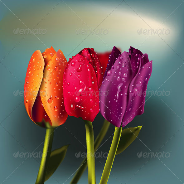 GraphicRiver Tulips in Vector 5633806