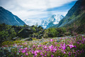 Mountain Beluha. Flowers on the field - PhotoDune Item for Sale