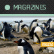 Mag Cover: Animal World - GraphicRiver Item for Sale