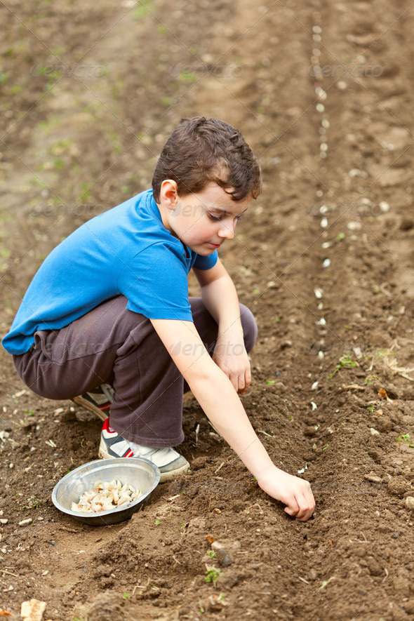 Cute kid planting garlic - Stock Photo - Images