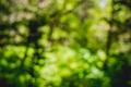Boke green - PhotoDune Item for Sale